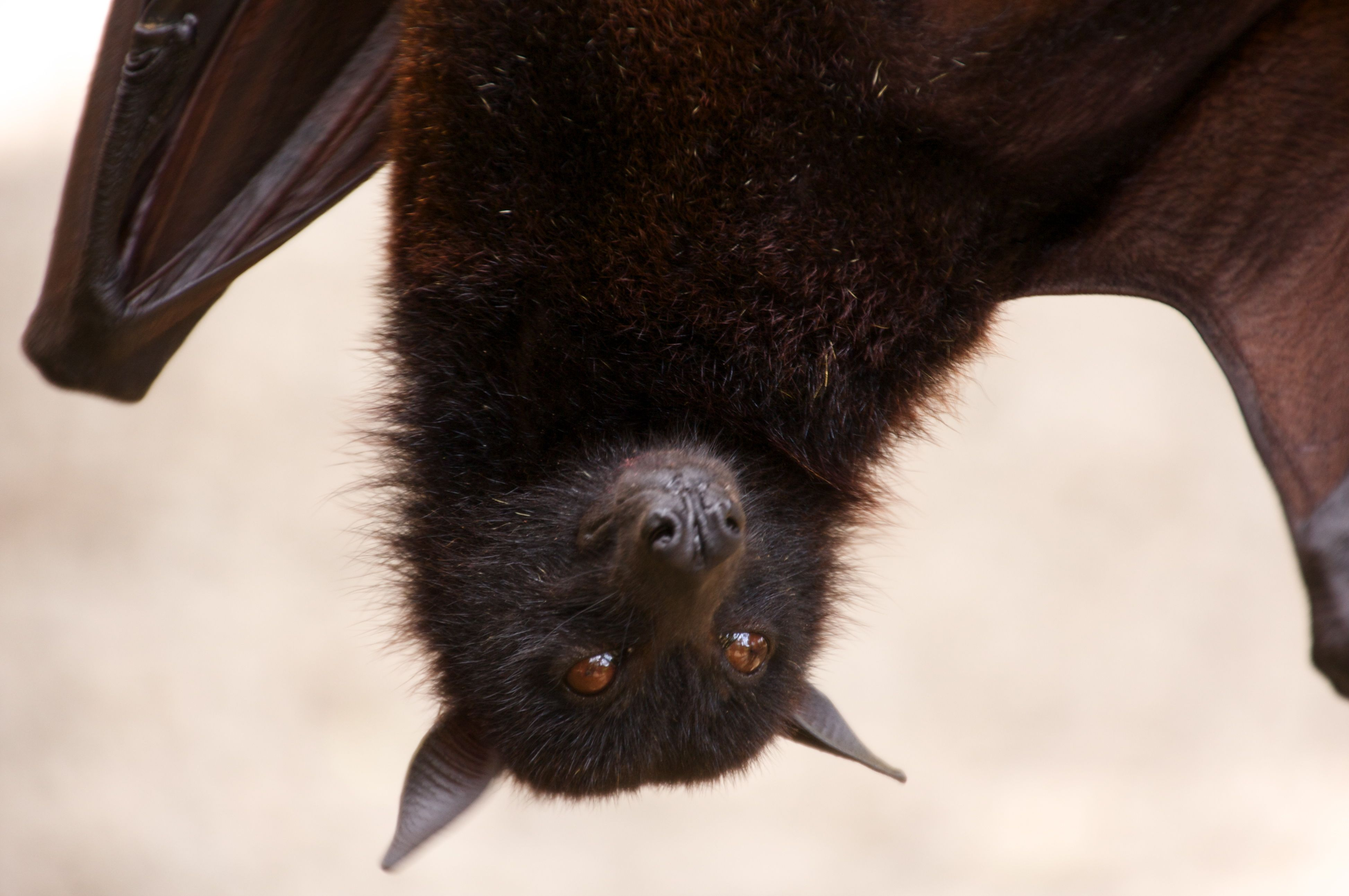 This is why we should all love bats wordpress biocorpaavc