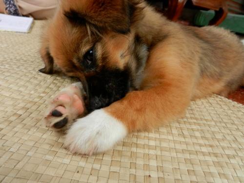 I'm so cute! I'm so cute!