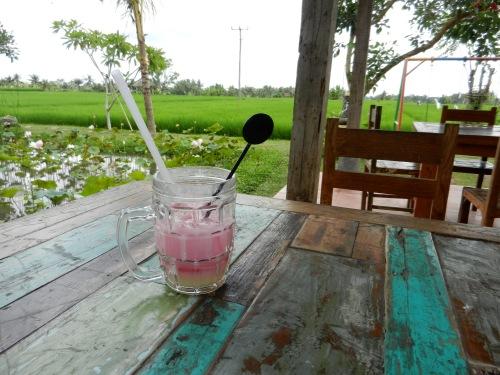 Soda Gembira (Joyful Soda) looking out at the rice fields